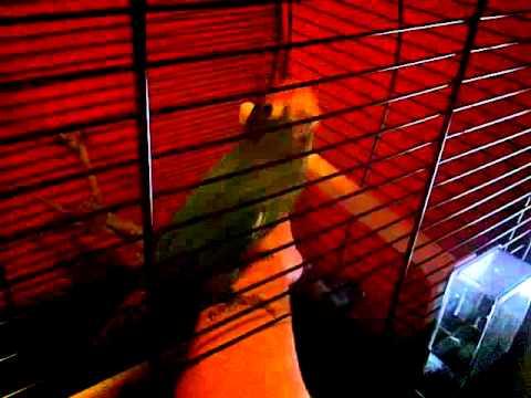 Bird 'Rico' likes to dance