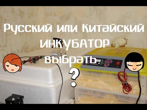 Какой инкубатор выбрать? Китайский или русский?