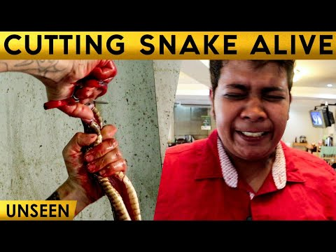 Snake's Heart Tasted | Exclusive Experience | Graphic Content