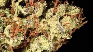 Repeat youtube video Las variedades de marihuana mas potentes del mundo