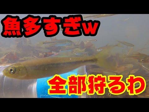 虫網だけでエグイほど子魚が捕れまくった!!【食べモンゲームin多摩川】