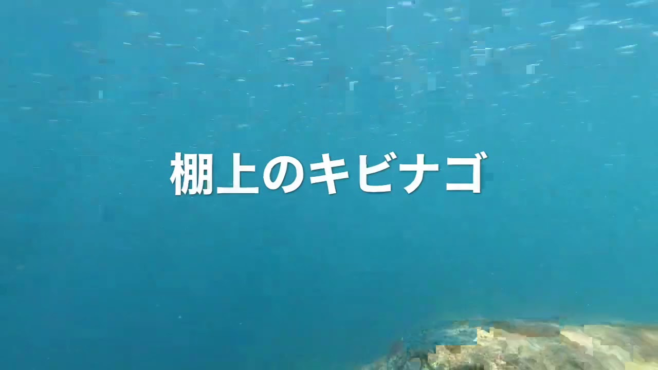 【8月30日】海楽すぃ~い!