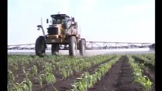 Защита кукурузы от сорняков