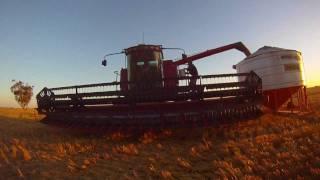 Grain Harvest Australia 2011