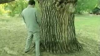 borat paying respect to the oldest tree in US&A