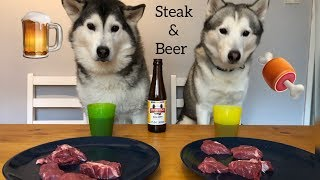 My Huskies Got Dog Beer & Steak to Celebrate Millie's Health!!... [EPIC FAIL!!!]