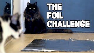 The Foil Challenge