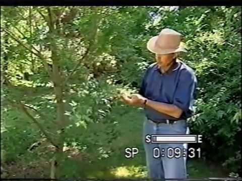 Favorite Trees - Dirt Doctor, Howard Garrett