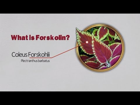 Forskolin review: What is Forskolin?