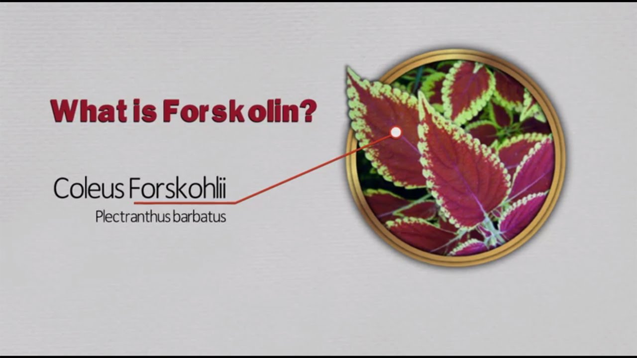 Forskolin review: What is Forskolin? - YouTube