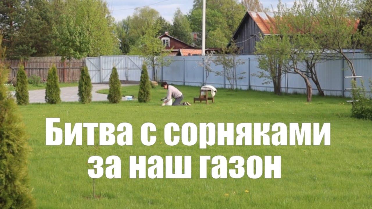 Красивый газон своими руками. Боремся с сорняками | Уход за газоном | Сад