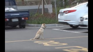 Dog Looks Up At An Apartment Till His Neck Hurts | Kritter Klub