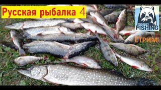 День Рождения с Русской рыбалкой 4 Russian Fishing 4 СТРИМ Старый Острог Русская рыбалка 4 ВПК