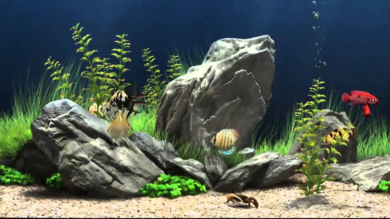 Aquarium screensaver fish tank 1080p hd - Fish Tank Screensaver Most Refreshing Free 3d Fish Tank Screensaver Youtube