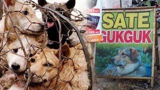 Download Video Terkenal Kota Kuliner Berbahan Daging Anjing, Ini Alasan Walikota Solo Tak Mau Melarangnya MP3 3GP MP4