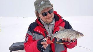 Сорога до полкило и мордатые окуни Рыбалка на безнасадку и балансир в феврале на водохранилище
