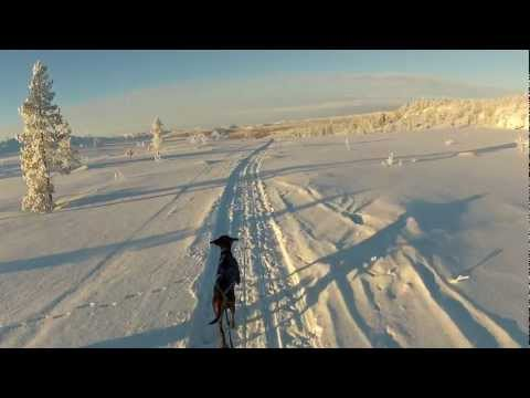 Cross-country skiing with my German wirehaired pointer