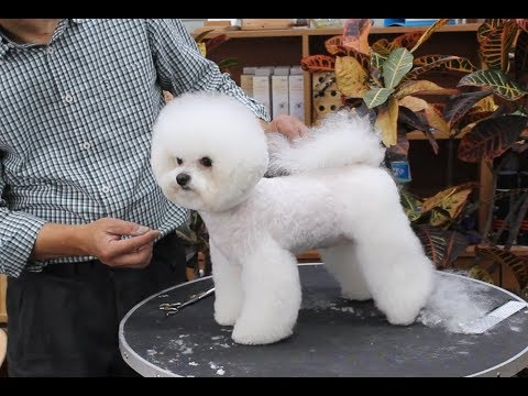 윤형석애견미용원 James' Dog grooming Salon Mong-gu