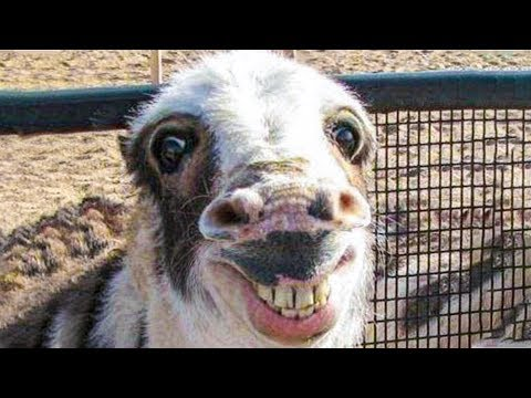 Funniest Animals   Try Not To Laugh   Funny Domestic And Wild Animals' Life 2019