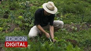 Empresa en Colorado contrata inmigrantes para trabajo de jardinería, pero depende de las visas