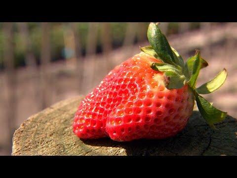 Strawberry Saga | 9 News Perth
