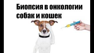 Биопсия в онкологии собак и кошек