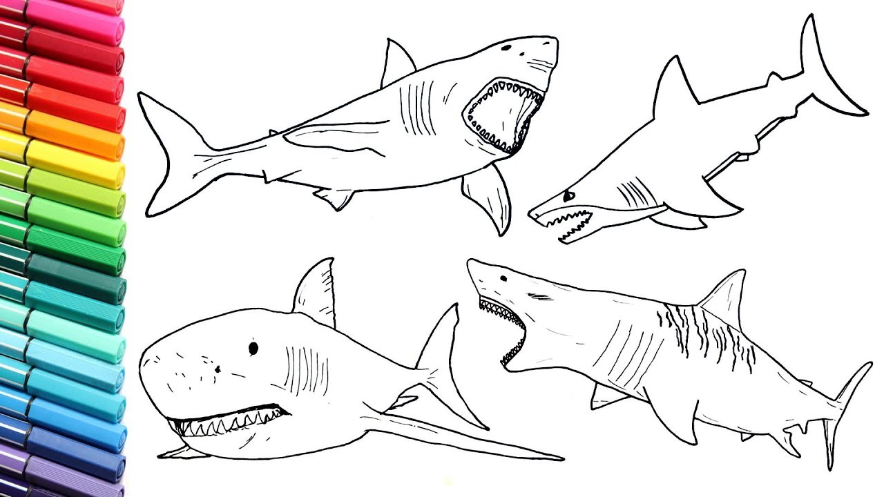 How To Draw Shark Color Pages Collection For Children Drawing Lesson Great White Shark Sea Monster Youtube