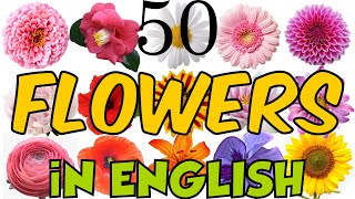 Learn 50 Types of Flowers in English! Flower Names with Pictures! Glossary of flowers!🌹🥀🌺🌸🌼🌻🌷