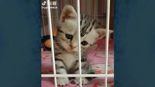 🐶🐱Try Not To Laugh Animals Compilation #4 🐶🐱Funny Infinite Viral's Video