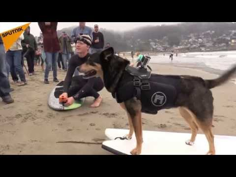 World Dog Surfing Championship Kicks Off In California