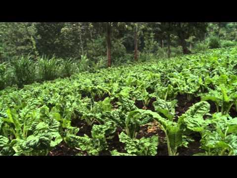 Smart Farm: Mixed Farming