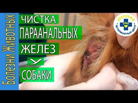 Д.Вилкерсон, Видение 1973 г..aviиз YouTube · Длительность: 1 час33 мин34 с  · Просмотры: более 255.000 · отправлено: 18.11.2011 · кем отправлено: Богдан Шевчук