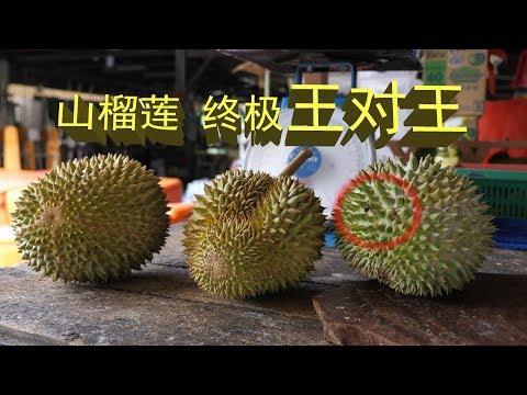 马来西亚山榴莲终极王对王   榴槤  Durian The King Of Fruit In Malaysia