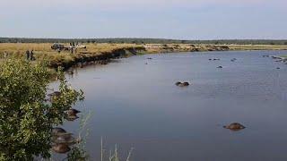 شاهد: غرق أكثر من 400 جاموس في بوتسوانا