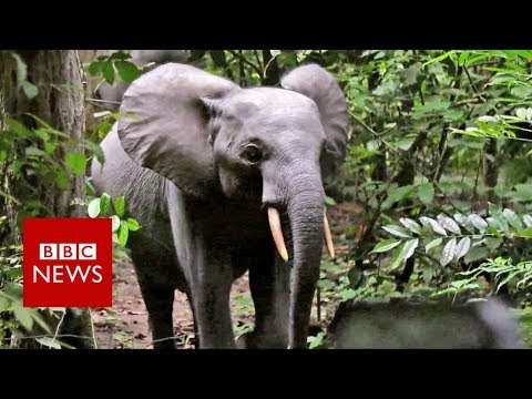 British army on elephant-saving mission - BBC News