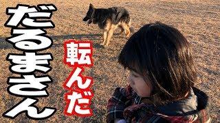 子供と遊ぶ大型犬 ジャーマンシェパード犬マック君孫娘りりかと遊んでい...