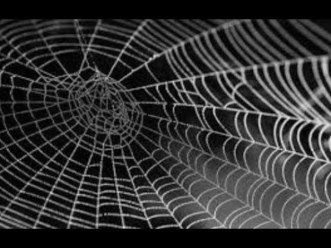 """Breaking: """"Massive Spider Web 1,000 Foot Web In Greece"""""""