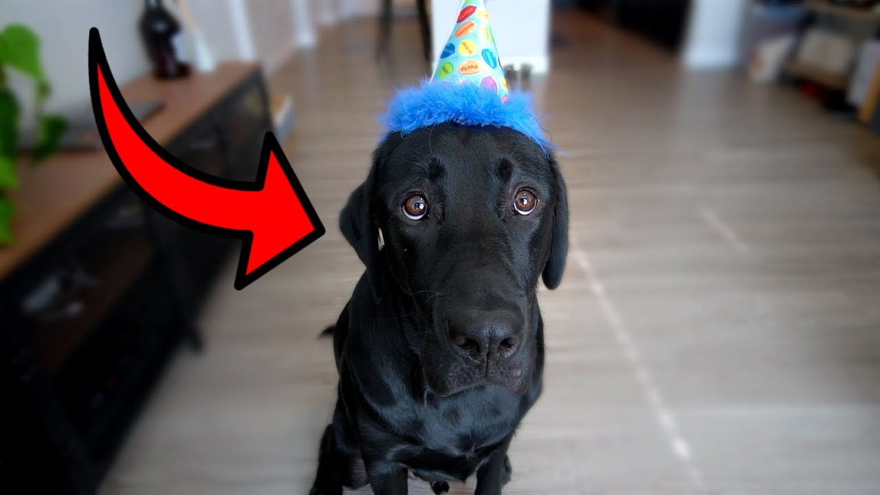 MY DOGS FIRST BIRTHDAY!!