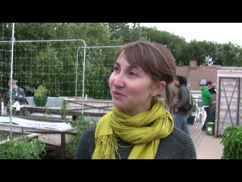 Organic Rooftop Farming in Chicago