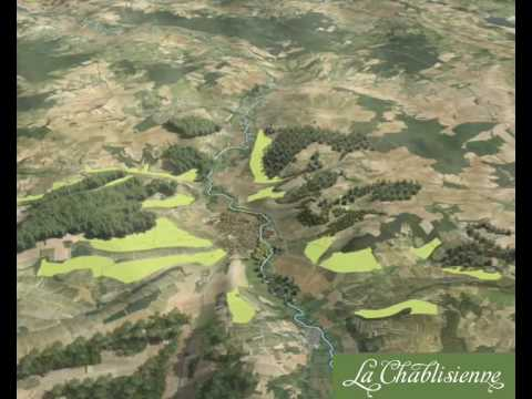 Chablis and its vineyards
