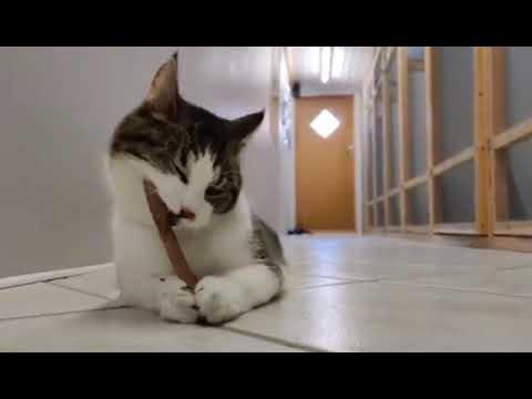 Katteleg.com - Tandbørster