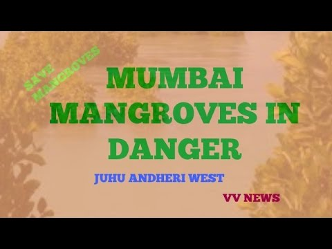 JUHU MANGROVE IN DANGER