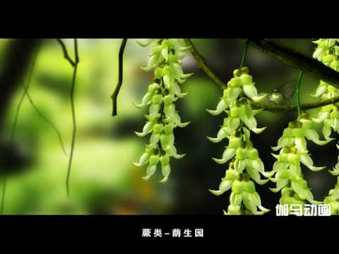 Chinese Academy of Sciences  South China Botanical Garden  An