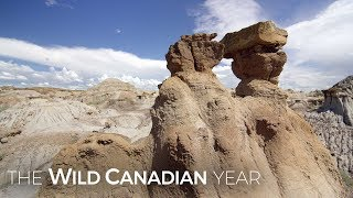 Alberta's Surreal Badlands Shaped By Torrential Rainstorms | Wild Canadian Year