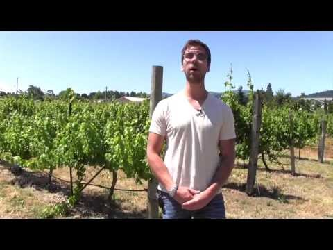 Marc Supsic's Wine Living – Washington and Oregon Wines