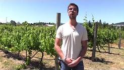 Washington and Oregon Wine Primer