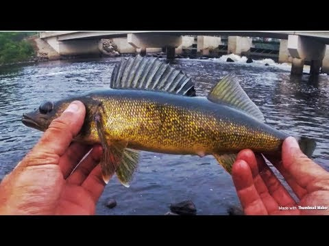 WALLEYE And BASS Fishing ELY Minnesota
