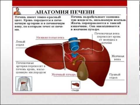 Лечение жирового гепатоза печени.