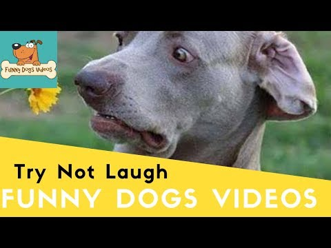 Funniest & Cutiest Dogs Reactions, Bloopers & Fails | Funny Dogs Videos Compilation #20
