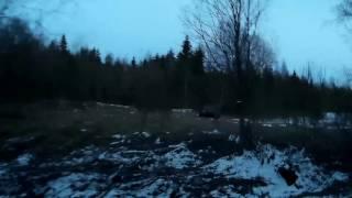 Открытие охоты на Вальдшнепа! Весна 2017